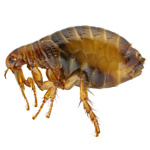 flea spray for yard are you in need of flea control services if so we